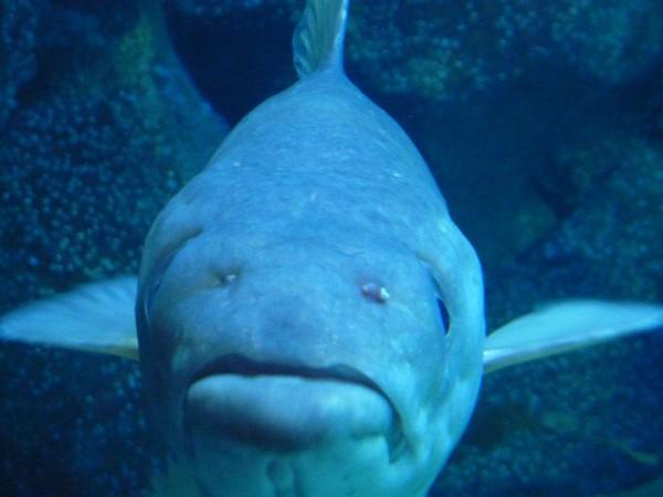 Plymouth Aquarium Sleepover